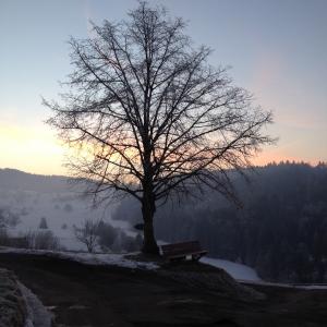 Lindenböimli Febr.15